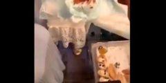بالفيديو.. السعودية أماني الحنطي تقدم الشوكولاتة لصديقاتها في حفائظ الاطفال