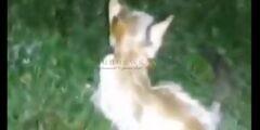 القبض على حارق القطة.. تعرف على جنسية حارق القطة