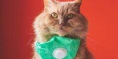 لأول مرة فيروس كورونا يُصيب قطة.. هل القطة نقلت العدوى لأصحابها أم العكس؟
