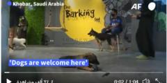 ذا باركنج لوت أول مقهى للكلاب في السعودية وصاحبته الكويتية دلال احمد