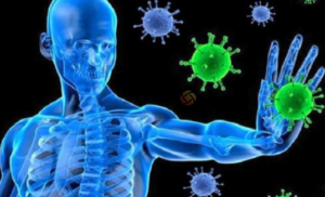 فيروس نيباه