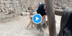 التفاصيل الكاملة لفيديو الكلب الثالث المثير للجدل.. شاهد من أين خرج الكلب الثالث
